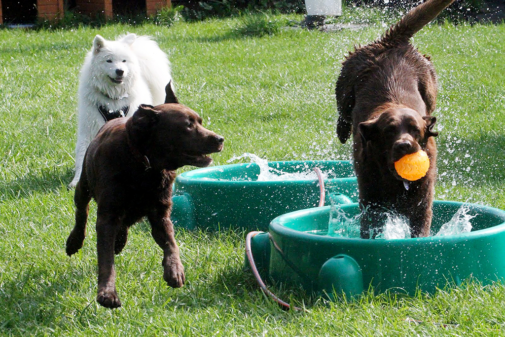 Dogs playing in outdoor pool at dog daycare in Zurich